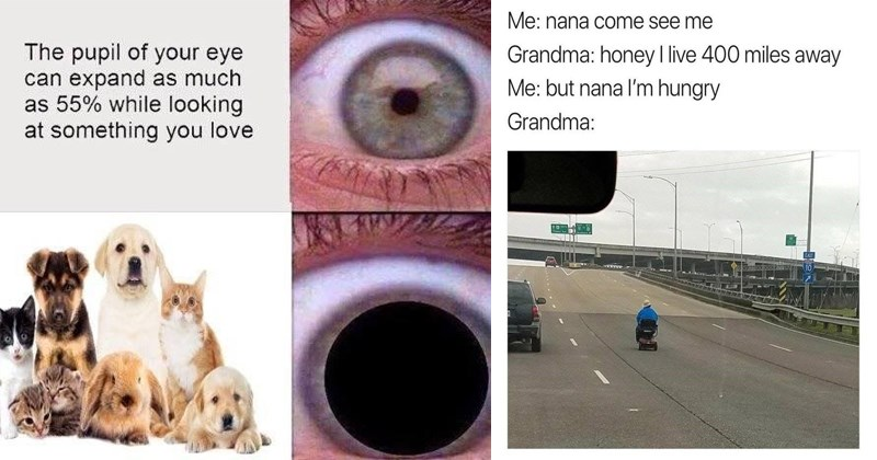 Funny memes, wholesome memes, love, friendship, dogs, cats, animals.