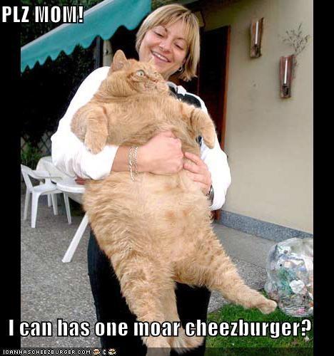 Cheezburger Image 491283200