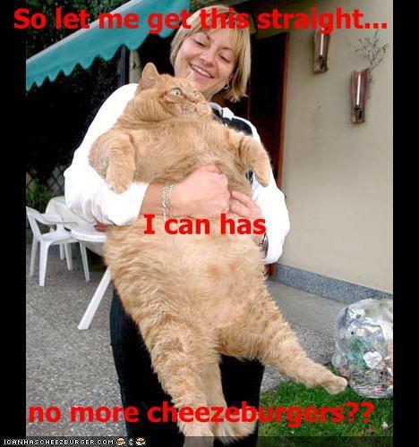 Cheezburger Image 491341056