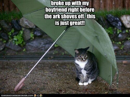 ark before boyfriend breakup broke up caption captioned cat hiding leaving noahs ark rain regret umbrella