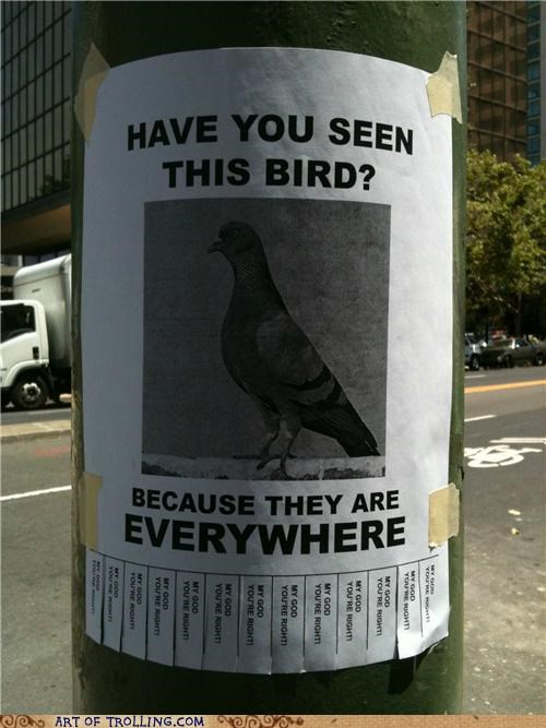 birds everywhere IRL pigeons - 4913862400