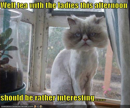 afternoon caption captioned cat chagrin embarrassed expectations expecting interesting ladies shaved tea - 4913893120