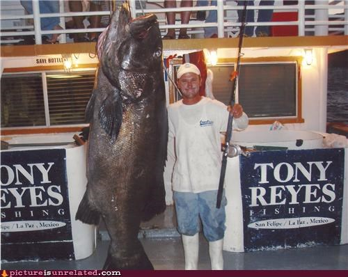 creepy fish huge wtf - 4914012160