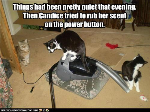 accident bad idea button caption captioned cat Cats disaster evening power quiet regret rub scent things vacuum