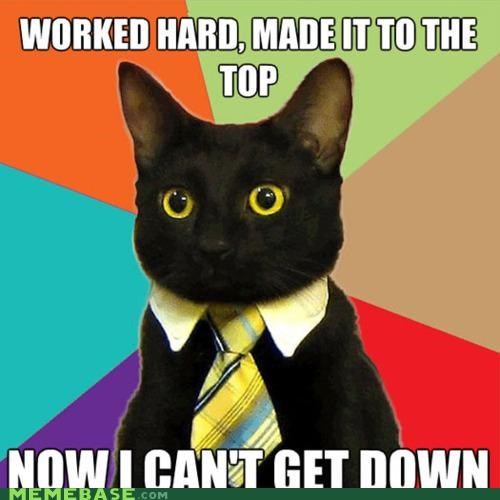 Business Cat,corporate,down,heights,ladder,top,tree