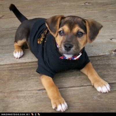 goggie ob teh week lucky mixed breed mutt puppy shirt - 4914546176