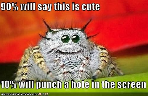 10 90 best of the week caption captioned cute hole opinion Peacock spider percent punch screen spider - 4914621696