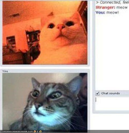 chat Chat Roulette internet trolling - 4914660352