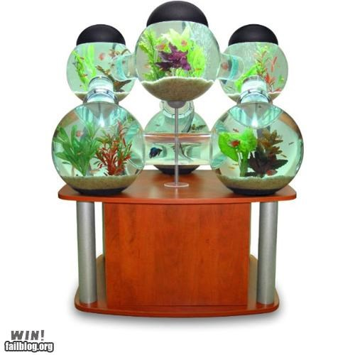aquarium design fish Hall of Fame tanks - 4914935296