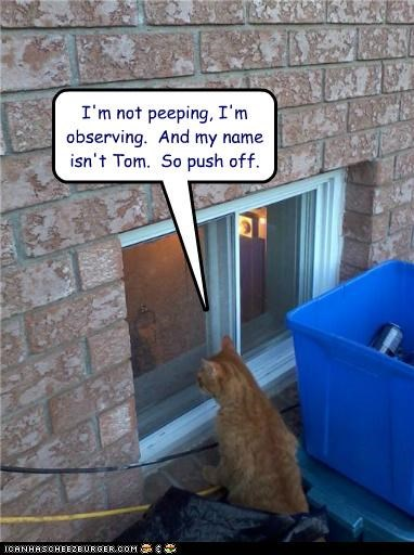 caption captioned cat denial is not name not observing peeking peeping push off tabby tom window