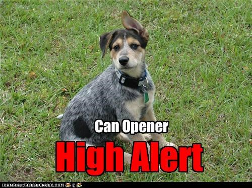 beagle,can opener,food,hearing,high alert,mixed breed,outdoors