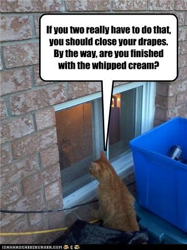 If you two really have to do that, you should close your drapes. By the way, are you finished with the whipped cream?