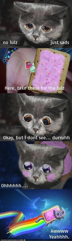 change memecats Memes morph Nyan Cat poptart Sad - 4915170048