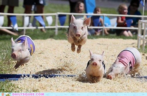 acting like animals announcer commentary Hall of Fame jumping pig race racing running - 4915301632