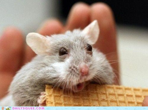 acting like animals appalled freaking out gluten gluten free hamster hives intolerant upset worried - 4915316736