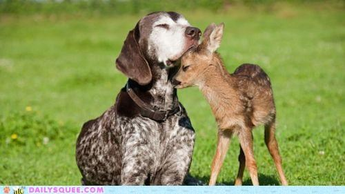 baby deer dogs fawn gesture Hall of Fame head Interspecies Love nuzzle nuzzling sweet - 4915376896