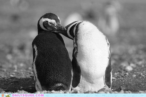 best,feathers,love,mischief,penguin,penguins,ruffle,ruffling,sugar-coating,sweet,way