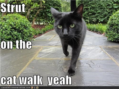 Strut on the  cat walk  yeah