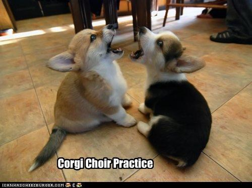 best of the week choir corgi friends Hall of Fame indoors puppies puppy singing - 4915667456