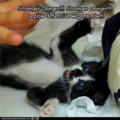 caption captioned cat danger defensive Deploy kitten now stranger stranger danger weapons