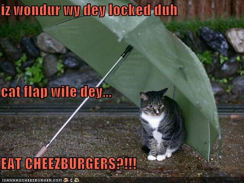 Cheezburger Image 4915975936