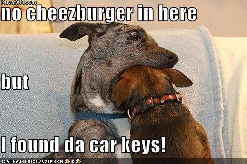 Cheezburger Image 4916824064