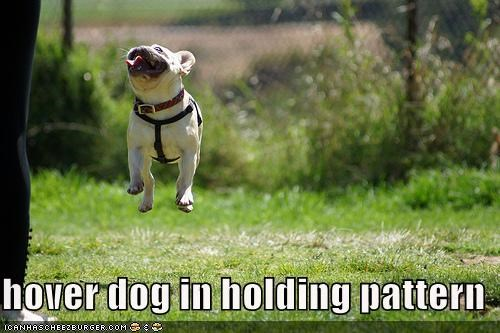 french bulldogs,happy,hover dog,jumping,outside,smiling