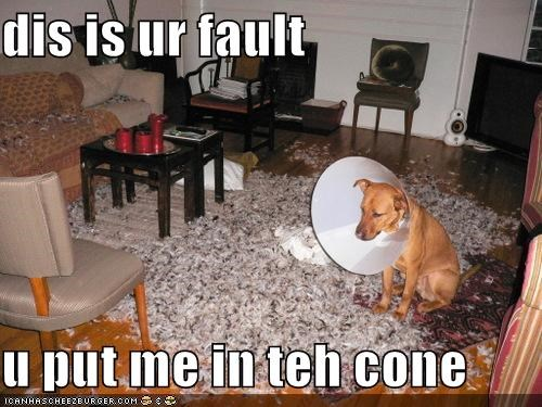 bad dog,cone of shame,destruction,indoors,mess,whatbreed