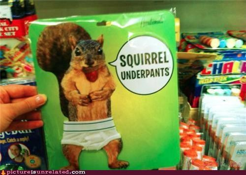 clothes squirrel underwear wtf - 4917550592