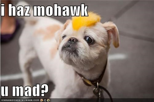 hairstyle,mohawk,shih tzu,yellow,you mad