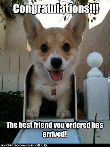 Congratulations!!! The best friend you ordered has arrived!