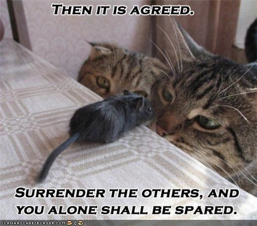 betrayal,caption,captioned,deal,food,Interspecies Love,mouse,noms,sacrifice,spared