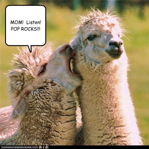 MOM! Listen! POP ROCKS!!!