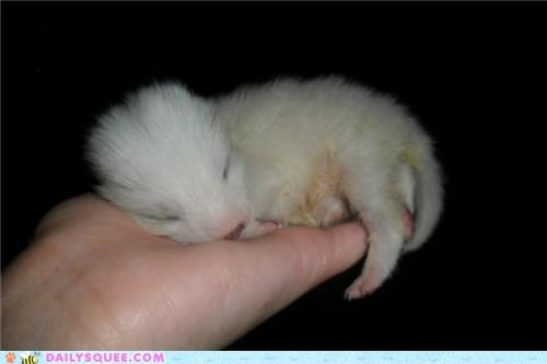 arctic fox baby Hall of Fame hand helping itty bitty one week old polar fox raising reader squees sleeping tiny - 4918489344