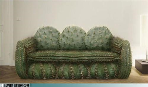 cactus,couch,furniture