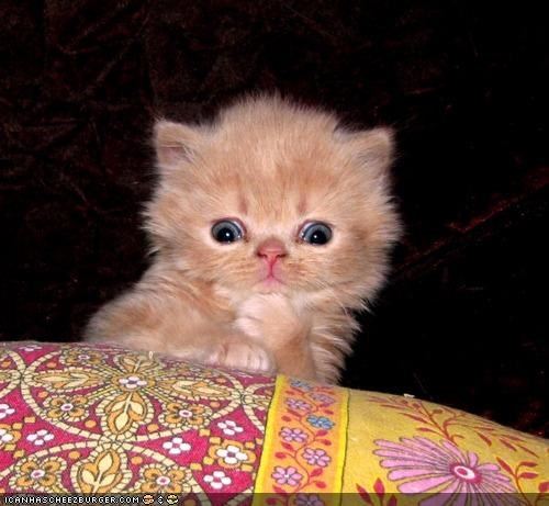 cyoot kitteh of teh day expressions hmm interested interesting thinking - 4918523904