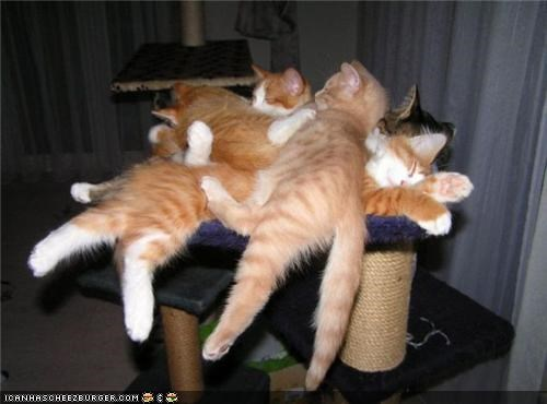 cat pile,cyoot kitteh of teh day,lots of cats,pile,scratching post,sleeping