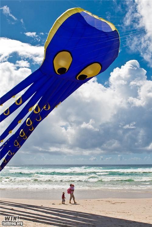 kite octopus summertime the beach - 4918591744