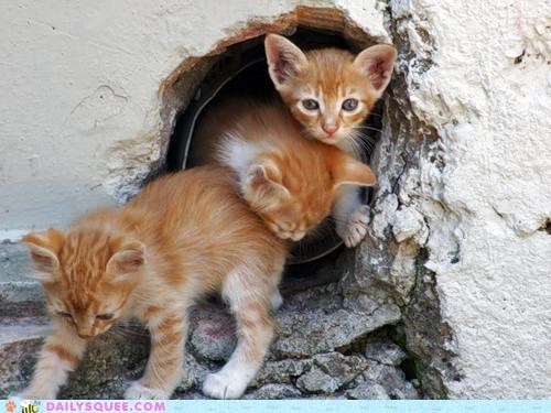 Cats,fun,kitten,spelunking