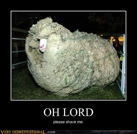 fuzzy,Hall of Fame,hilarious,oh lord,sheep,wtf