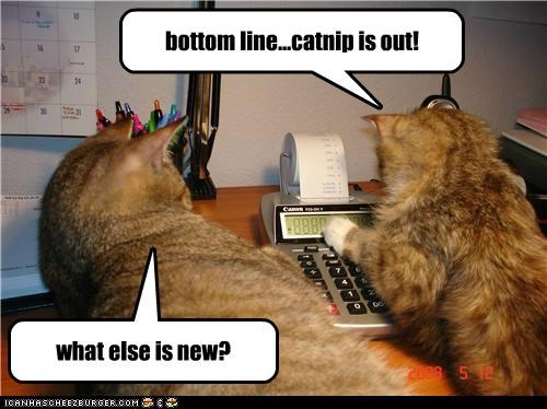 bottom line...catnip is out! what else is new?