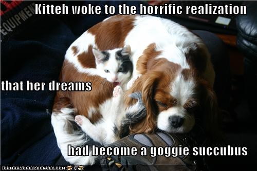 Kitteh woke to the horrific realization that her dreams had become a goggie succubus