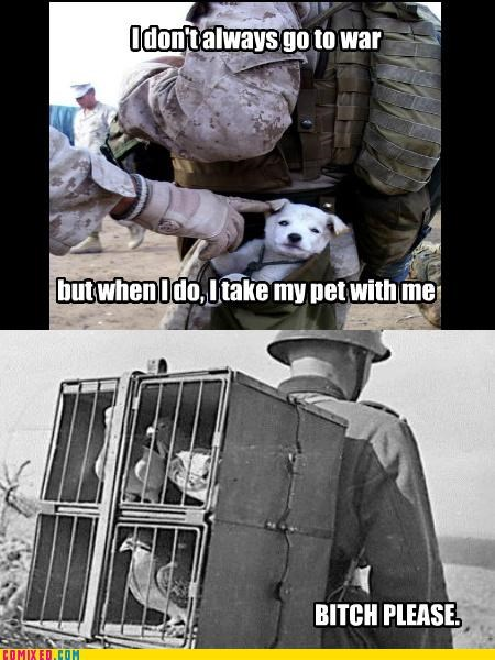 dogs,pet,pigeon,soldier,the internets,war