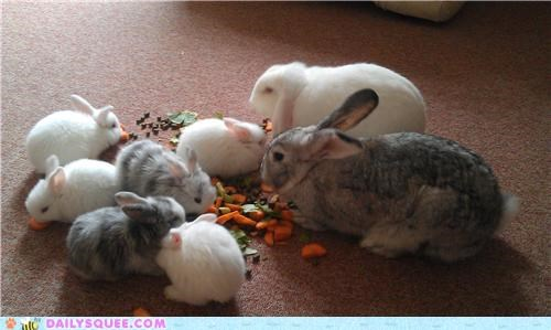 Babies baby bunnies bunny eight family impressed names parents rabbit rabbits reader squees - 4920100096