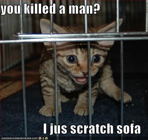 jail,kitten,lolcats,lolkitehs,murder