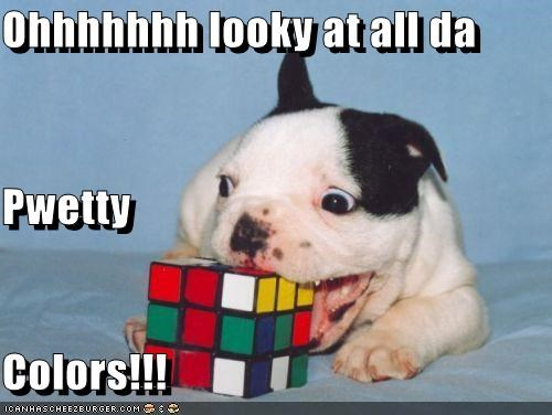 boston terrier,chewing,puppy,rubiks cube