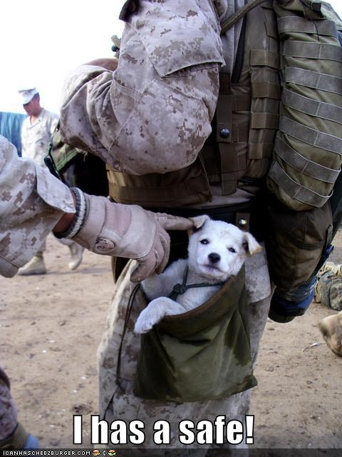 best of the week,Hall of Fame,military,puppy,rescue,safety,whatbreed