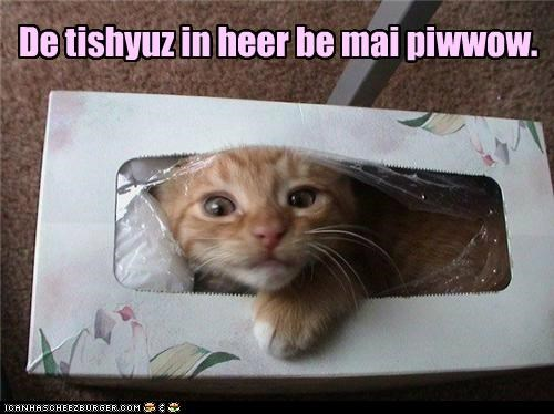De tishyuz in heer be mai piwwow.