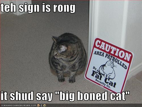 big boned fat lolcats sign - 492080896