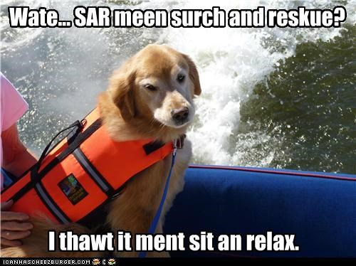 boat,golden retriever,lifevest,rescue